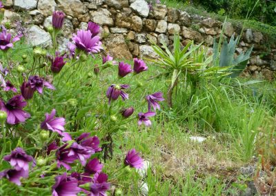 Jardin P1030719